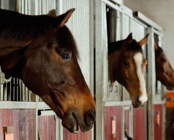 Equestrian Finance